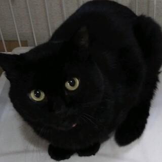 お茶目なイケメン☆黒猫ピノ君❣️