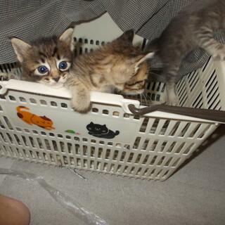 3匹の生後間もない兄弟猫です