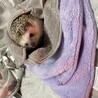 可愛いハリネズミのために良い家を探しています!