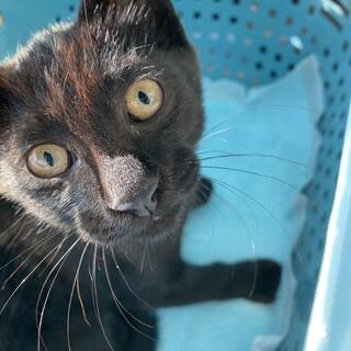 雑種の黒猫、人懐こいです!