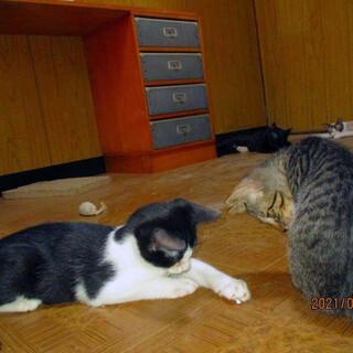 3匹のお母さんが産んだ16匹のの仔猫たち