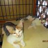 3匹のお母さんが産んだ16匹のの仔猫たち サムネイル2