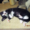 3匹のお母さんが産んだ16匹のの仔猫たち サムネイル5