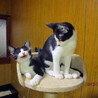 3匹のお母さんが産んだ16匹のの仔猫たち サムネイル6