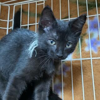 5兄妹の黒猫。好奇心旺盛なイケメンアオくん♡