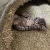 生後3週間 子猫達