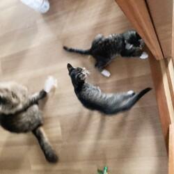 「子猫遊び盛り」サムネイル1