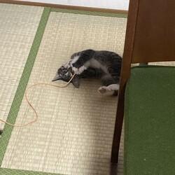 「子猫遊び盛り」サムネイル2