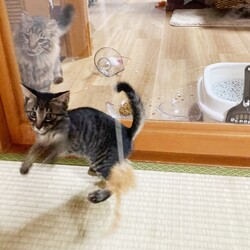 「子猫遊び盛り」サムネイル3