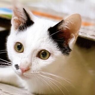 人懐こい白黒仔猫♪クローバー