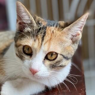 好奇心旺盛な三毛仔猫♪桔梗