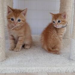 保護猫カフェQsmet(くすめっと) 定例里親譲渡会