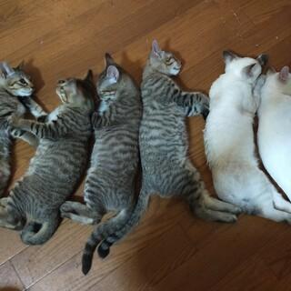 げんきな子猫達です!