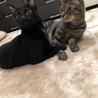 人懐っこい黒猫女の子とキジトラ男の子