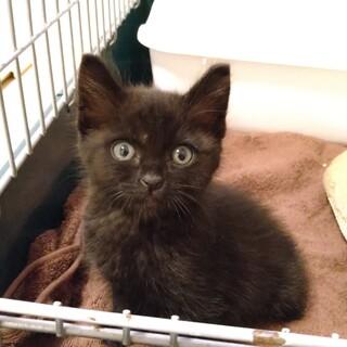 やんちゃ盛りの黒猫君!素敵なご縁がありますように
