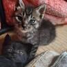 子猫4匹里親募集