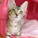 大きな耳と目、そしてその美しい顔、イクリちゃん