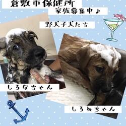 「倉敷、ワンコのエステDay→全頭譲渡決定!」サムネイル3