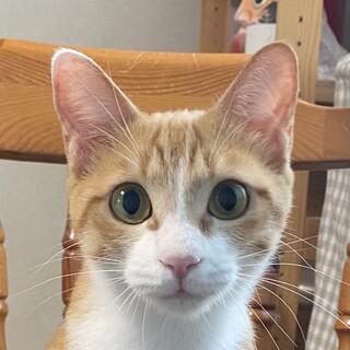 スタイル抜群!美人猫の甘えん坊「スズメ」ちゃん。
