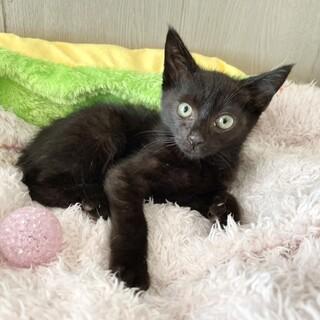 こしあんちゃん♂黒猫
