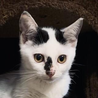 花子 2ヶ月 白黒 きょとん顔くっつき虫 鍵しっぽ