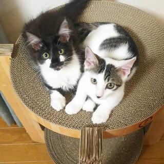 犬のように人懐っこい長毛&白猫美人姉妹2匹