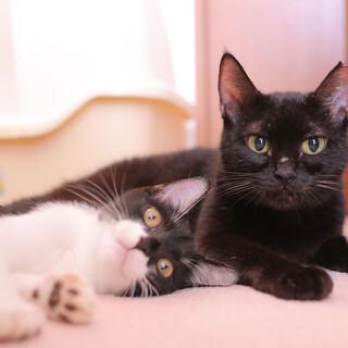 人懐っこい母性愛の黒猫と3ヶ月のバットマン子猫~♪
