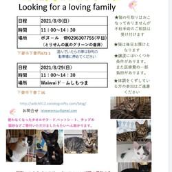 下妻猫譲渡会 ボヌール8/8