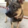 センターよりレスキューしたお母さんが産んだ子犬 サムネイル5