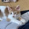 三毛ちゃんと同じ兄弟猫です。