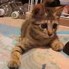 可愛い「オレオちゃん」人が大好き猫も大好き!