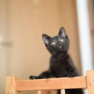 プリンス♡かっこいい黒猫【8/1 柏】