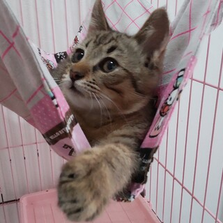 超の付く甘えん坊☆ゴロスリ子猫
