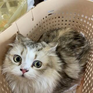 美猫ちゃこ