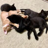 6匹の子猫と母猫里親募集 サムネイル4