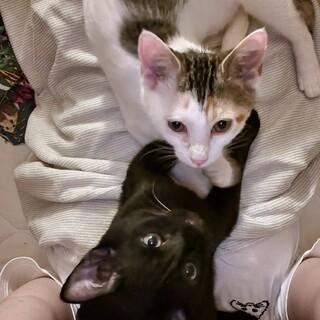 黒猫のももクロくんと三毛のふーみんちゃん