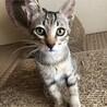 【メダル】人が大好きキジトラ子猫 サムネイル3