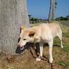 穏やかな中型犬の女の子♡県外譲渡可