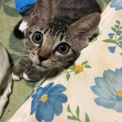三重県桑名市8月8日(日)第118回リトルパウエイド猫の譲渡会