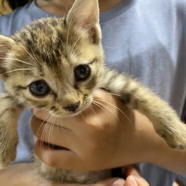 里親募集!とても可愛い子猫です。