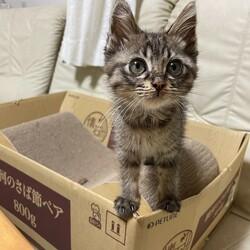 茨城つくば猫里親会 サムネイル2