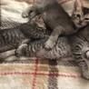 子猫の三姉妹、可愛がって下さる方に。