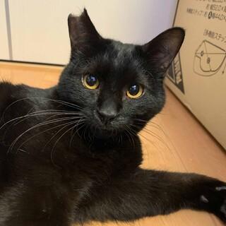 甘えん坊の黒猫