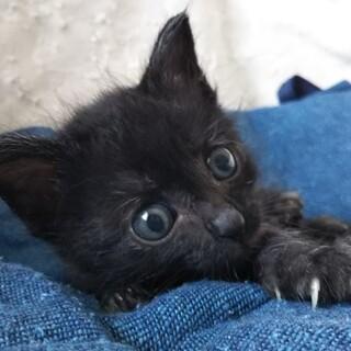 おっとり坊や、黒猫の ごの君