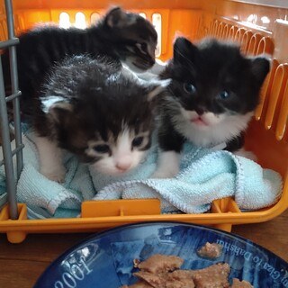 オス猫3匹