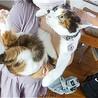 ト幸せ顔の三毛猫、梨月(りんか)ちゃん