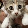子猫の里親様募集しています