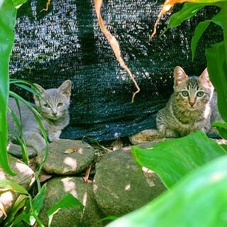 …急募です…2ヶ月の子猫3匹…