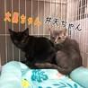 可愛い2.3ヶ月の子猫たち