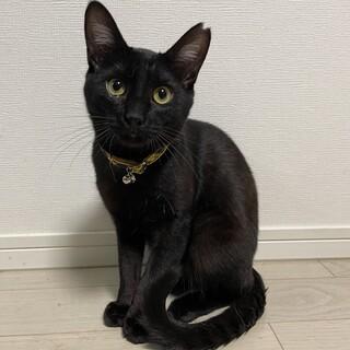 エイズキャリアの黒猫のロコちゃん♂️